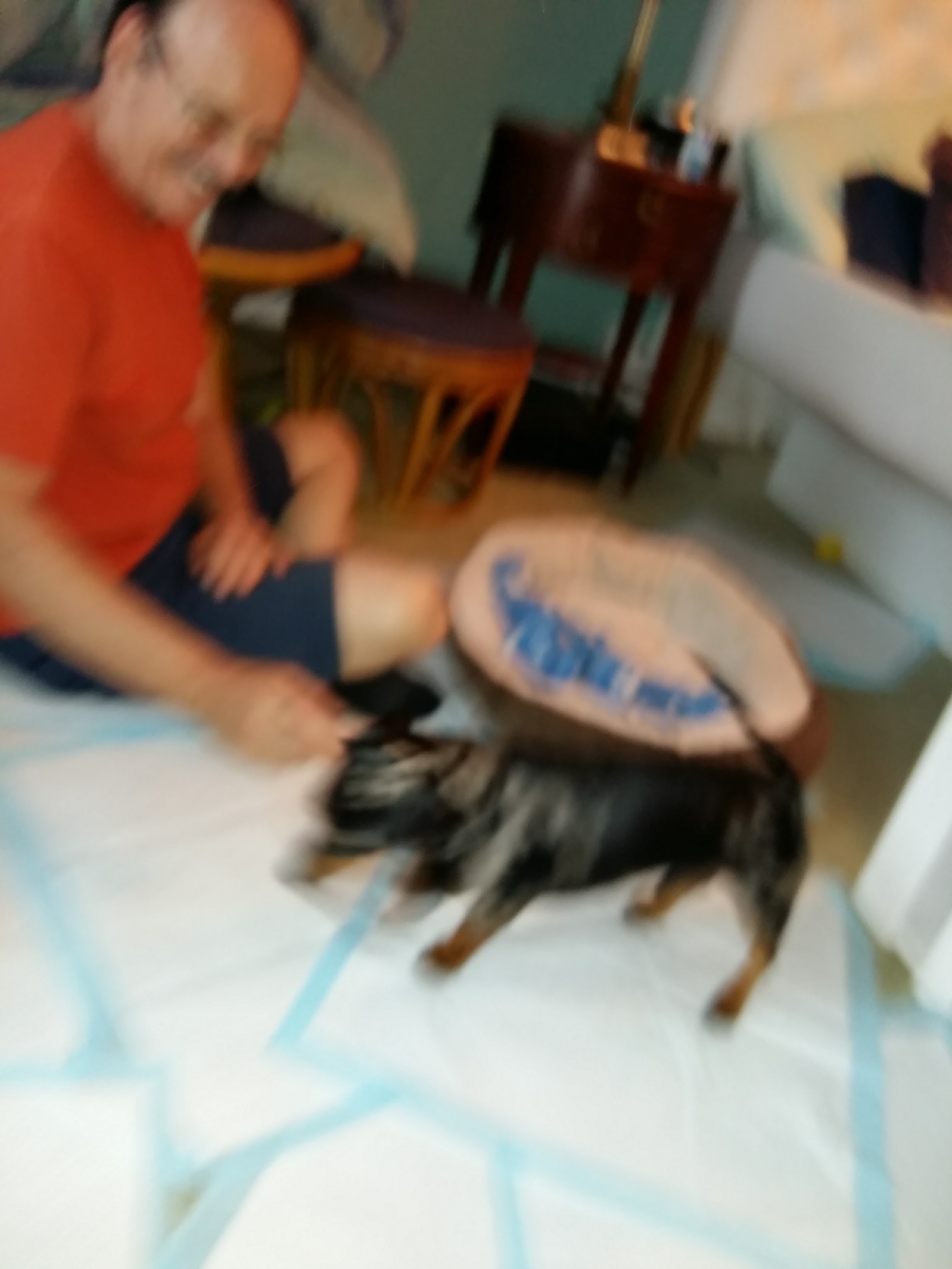 Hunterla Garderie les petits chiens mignons