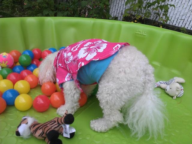 Lady-Dila Garderie les petits chiens mignons