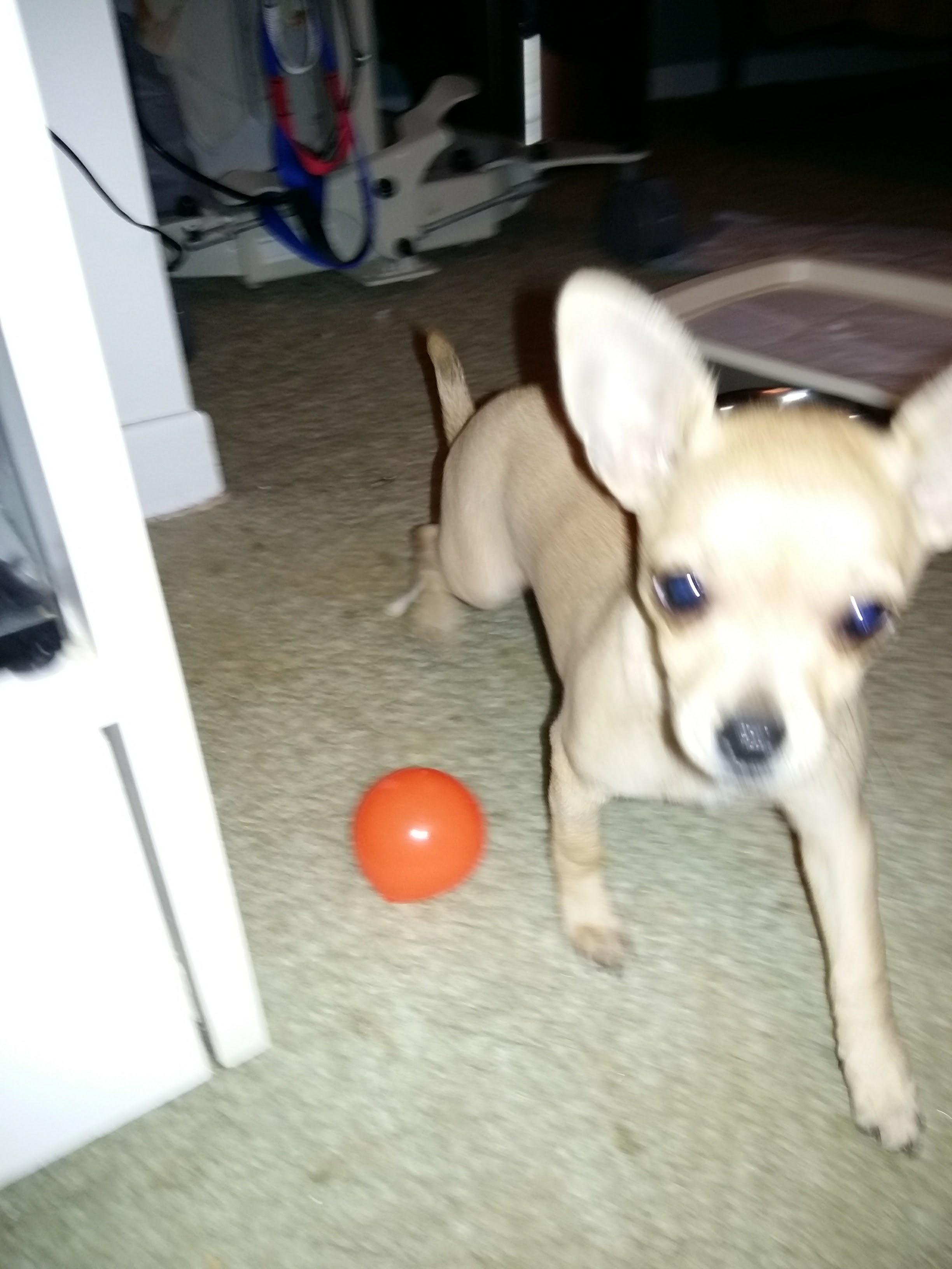 Lexila Garderie les petits chiens mignons