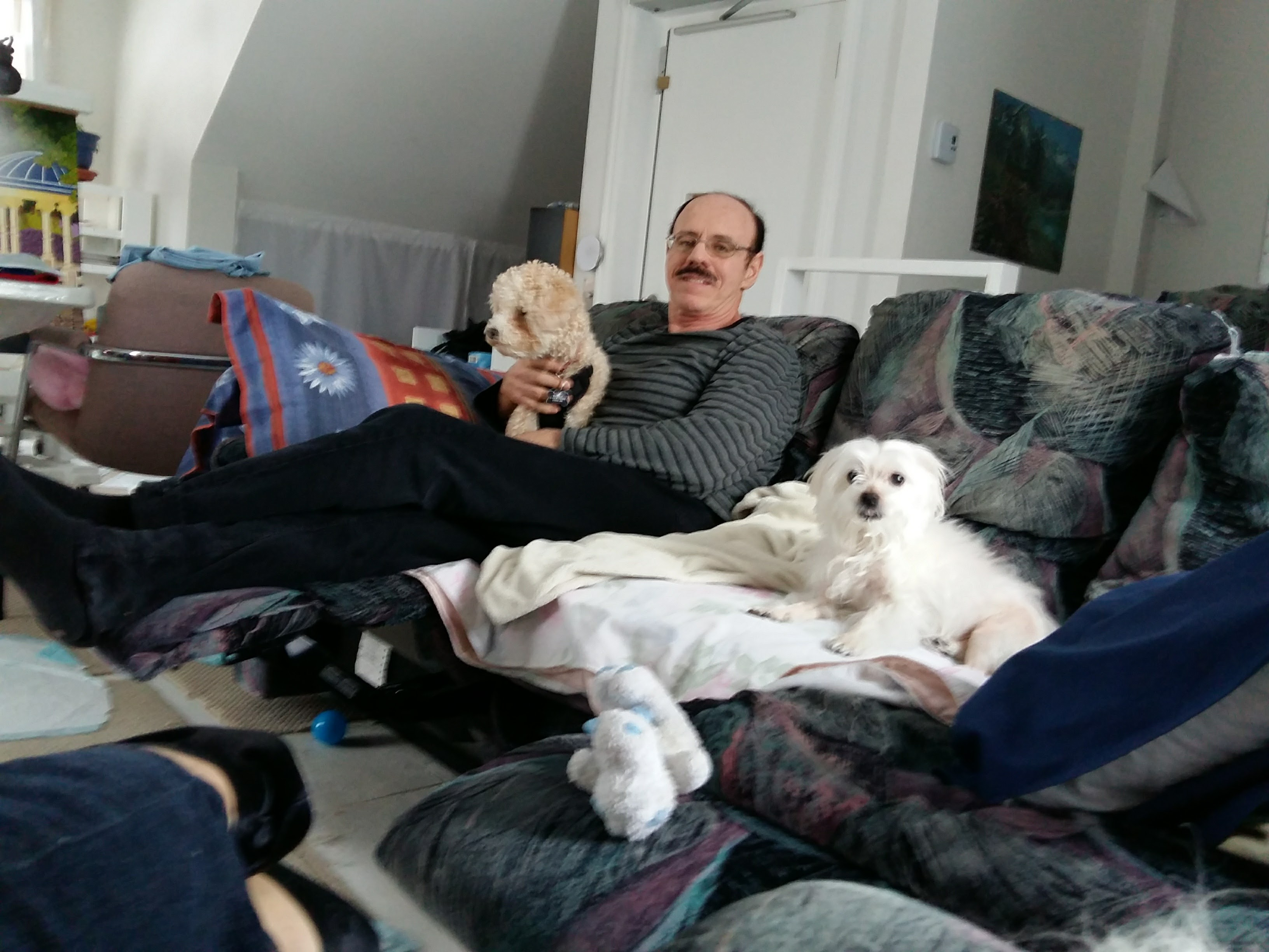 Mahalola Garderie les petits chiens mignons