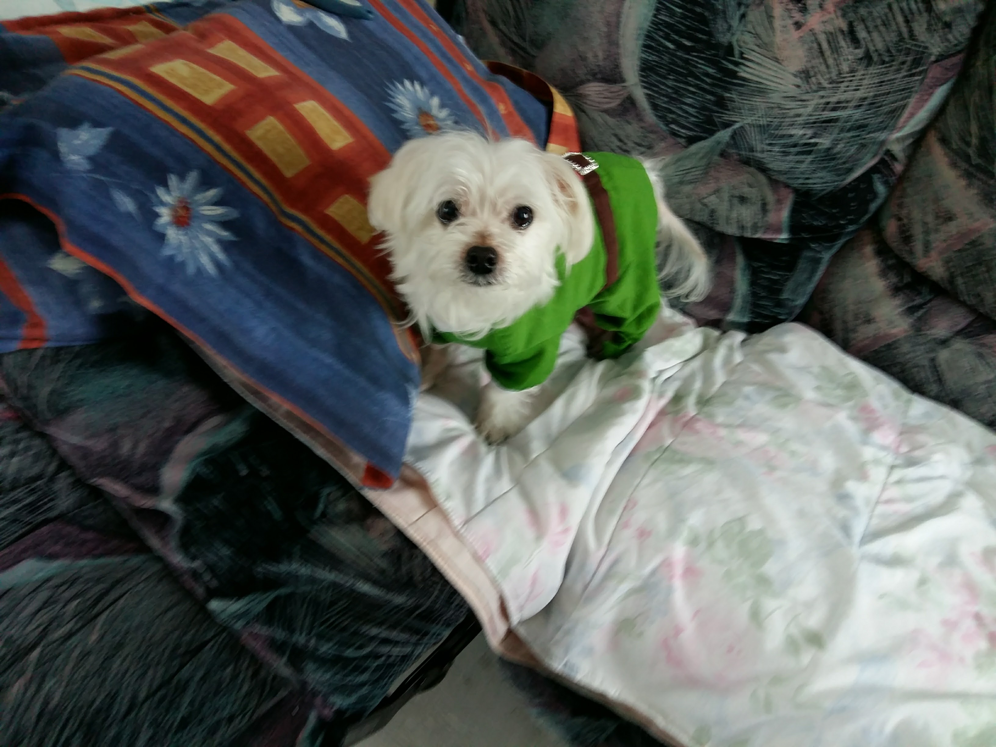 Puffyla Garderie les petits chiens mignons