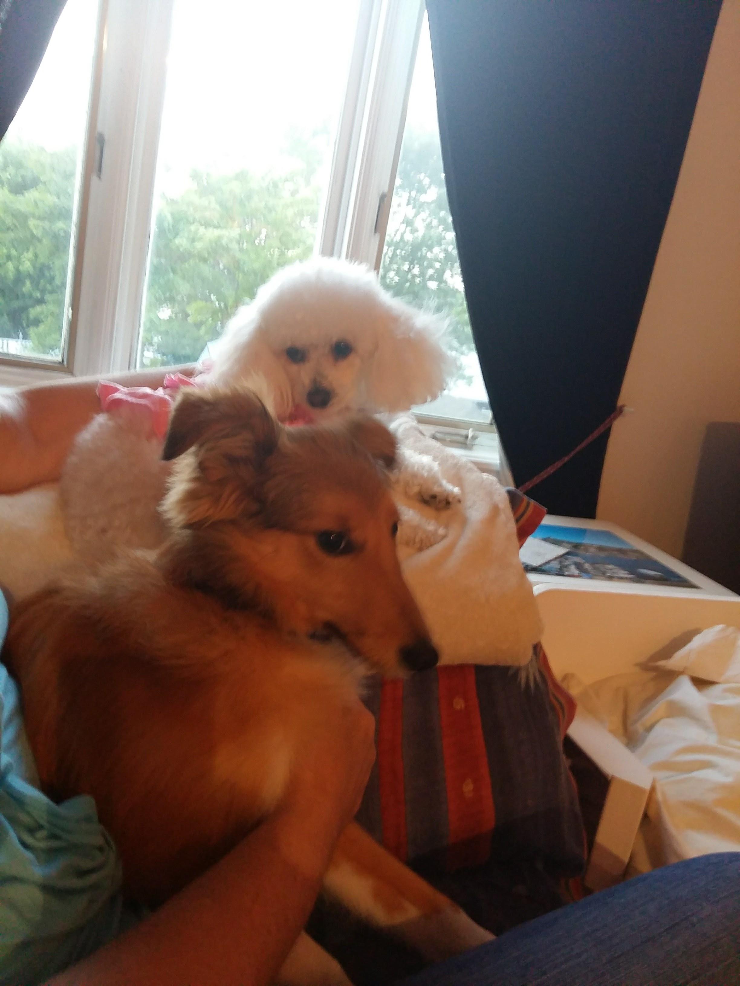 Rockyla Garderie les petits chiens mignons