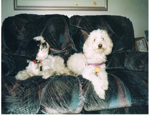 Ti-Gars_Frimoussela Garderie les petits chiens mignons