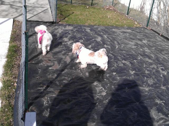 Ti-Poula Garderie les petits chiens mignons