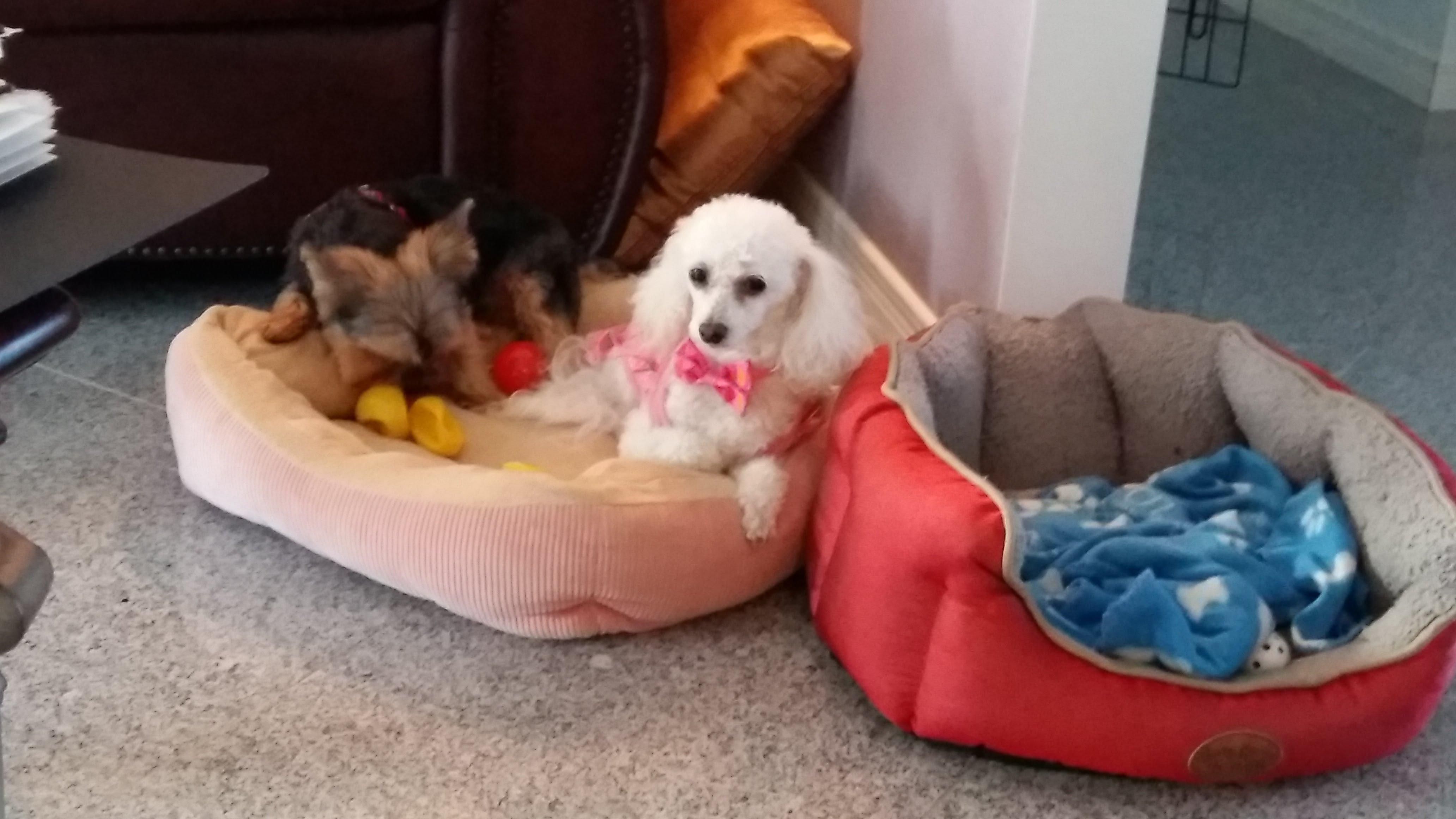 Tobyla Garderie les petits chiens mignons