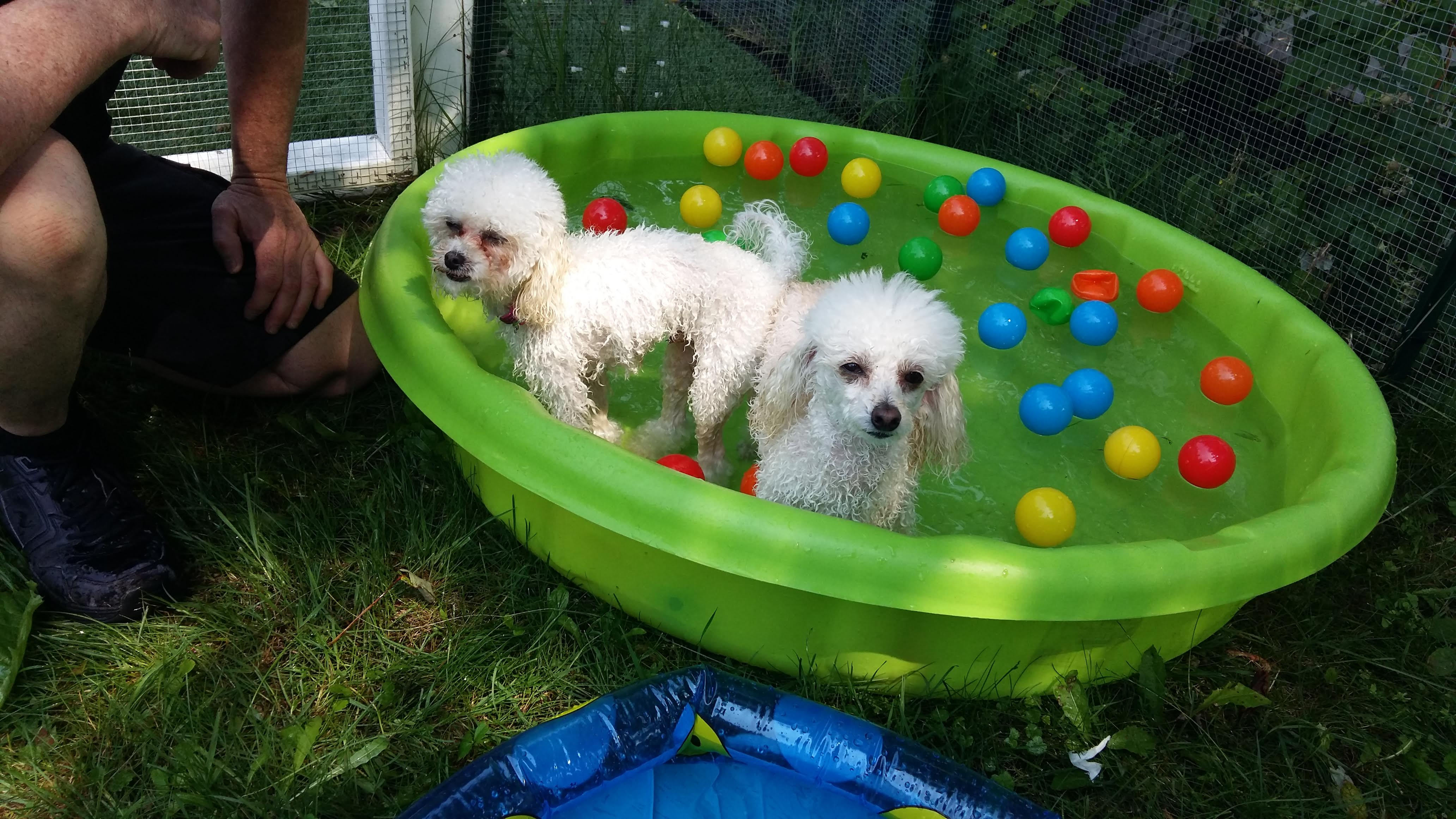Willyla Garderie les petits chiens mignons
